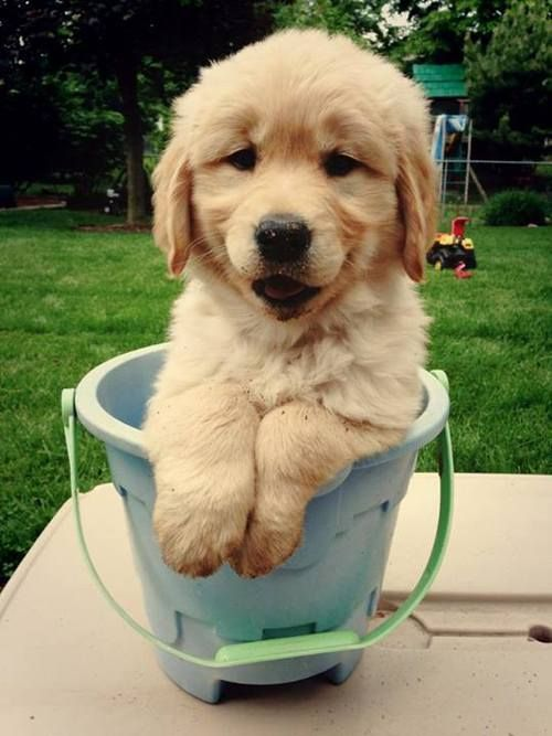 13 Ways To Get Your Dog To Stop Barking Golden Pinterest