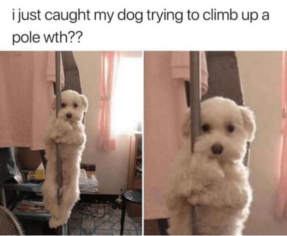 Heckin' Good Doggo Memes (33 Memes)