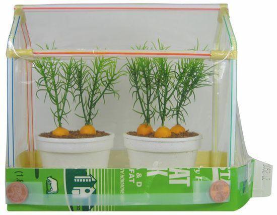 To Do: Make Mini Greenhouse...half-gallon Milk Carton, Plastic ...