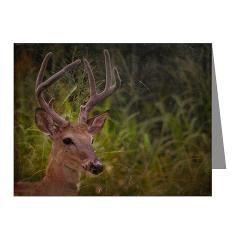 Young Florida Buck notecards.