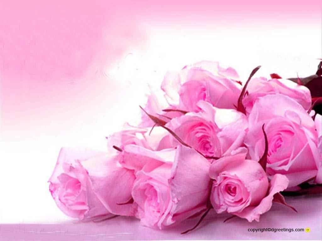 Hot Pink Pink Roses Background Pink Wallpaper Iphone Hot Pink