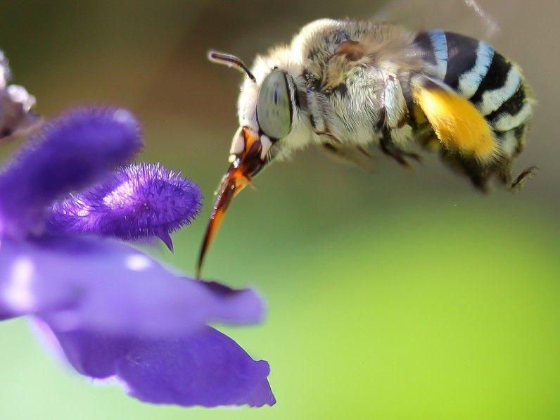 My Mum's Garden is a Bee Hotel | Bee, Bee friendly