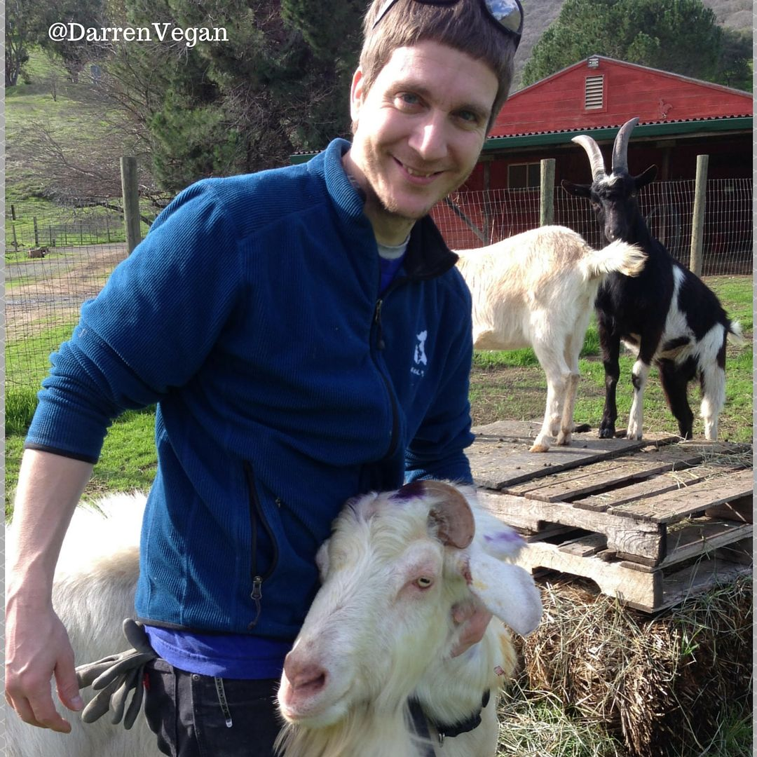 Caregiver Blake and Bob the goat sharing some love at Animal Place's Rescue Ranch. (Photobomb courtesy of Lucas's front and Butterscotch's rear.) All three goats are available for adoption at http://bit.ly/APadopt.