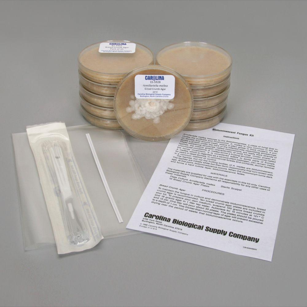 Bioluminescent Fungus Kit | Carolina.com