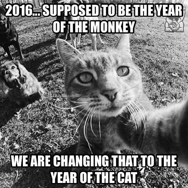 2+0+1+6 = 9 2016 is the year for Nine Lives, happy new year to everyone.