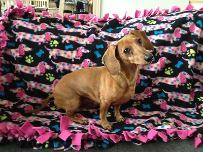 Midwest dachshund rescue website