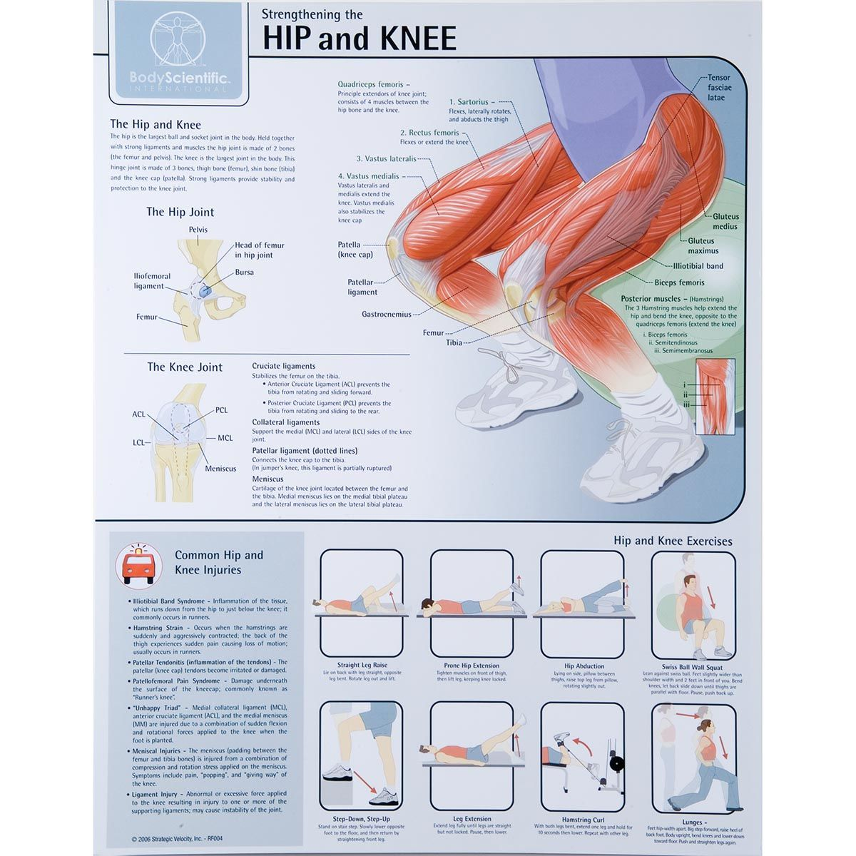 Strengthening the Hip and Knee Chart - Laminated | Muscles ...