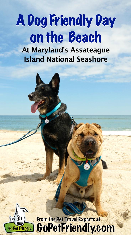 Dog Friendly Beach At Maryland S Assateague Island National Seashore