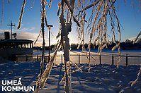 Vykort – vinter och jul - Umeå, // Digital postcards from Umeå. (Christmas and Winter)