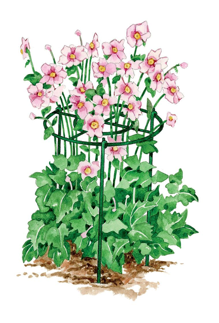 Grow Through Flower Supports Gardener S Supply Growing Peonies Garden Supplies Growing Flowers