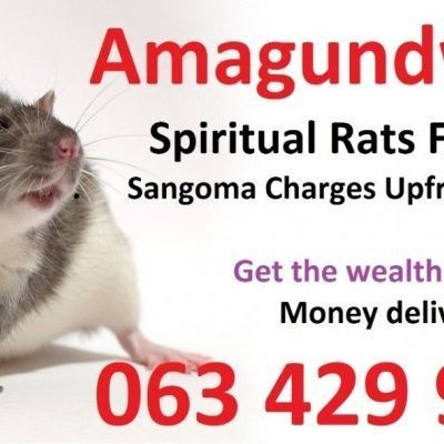 Money spells in south africa | Love spells in usa by spiritual rats ,27634299958 sangoma in Other Languages on KityFeed | Free classified ads #moneyspells Money spells in south africa | Love spells in usa by spiritual rats ,27634299958 sangoma in Other Languages on KityFeed | Free classified ads #moneyspells Money spells in south africa | Love spells in usa by spiritual rats ,27634299958 sangoma in Other Languages on KityFeed | Free classified ads #moneyspells Money spells in south africa | Love #moneyspell