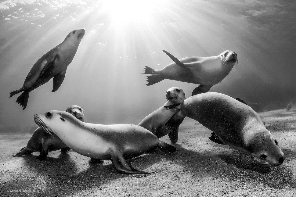 Crías de león marino en una playa australiana (Michael Patrick O ...
