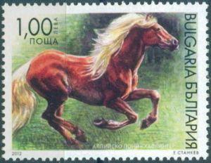 Haflinger (Equus ferus caballus)