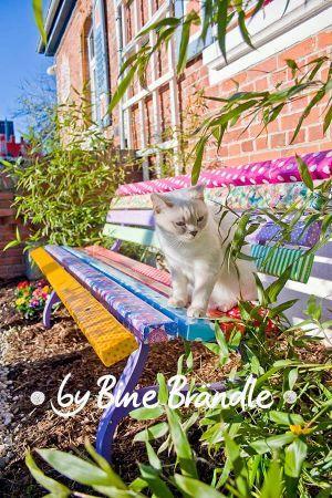 Garten sommer diy ideen summer pinterest garden - Gartenbank bunt ...