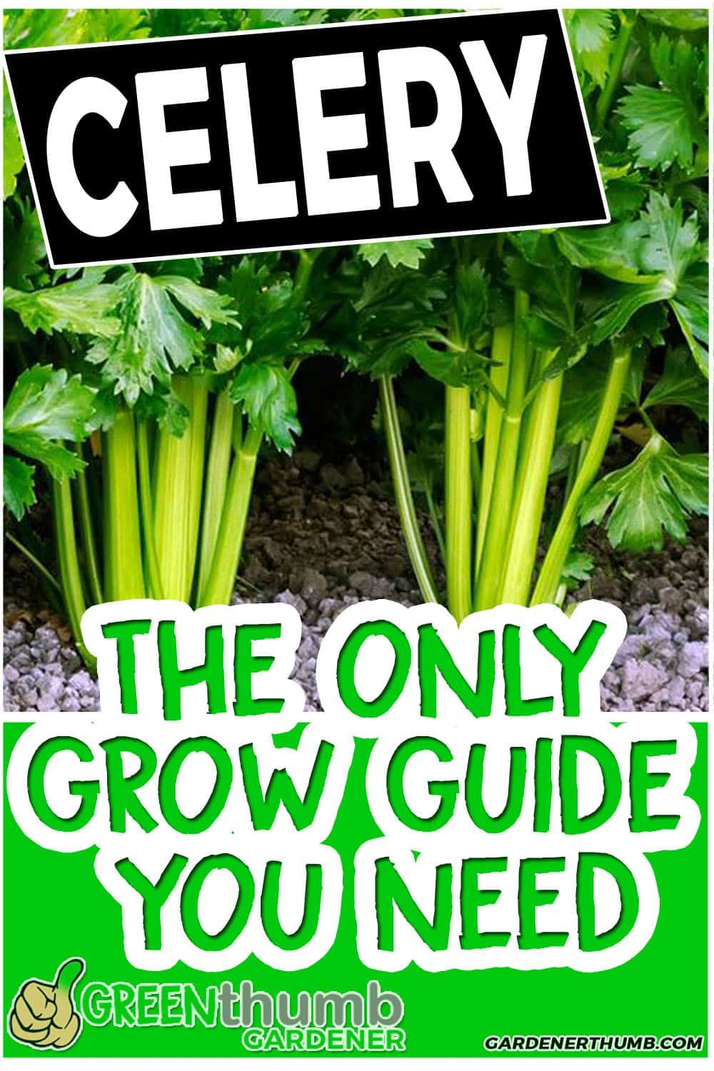 Growing Celery Is One Of The Vegetables That Are Grown In 640 x 480