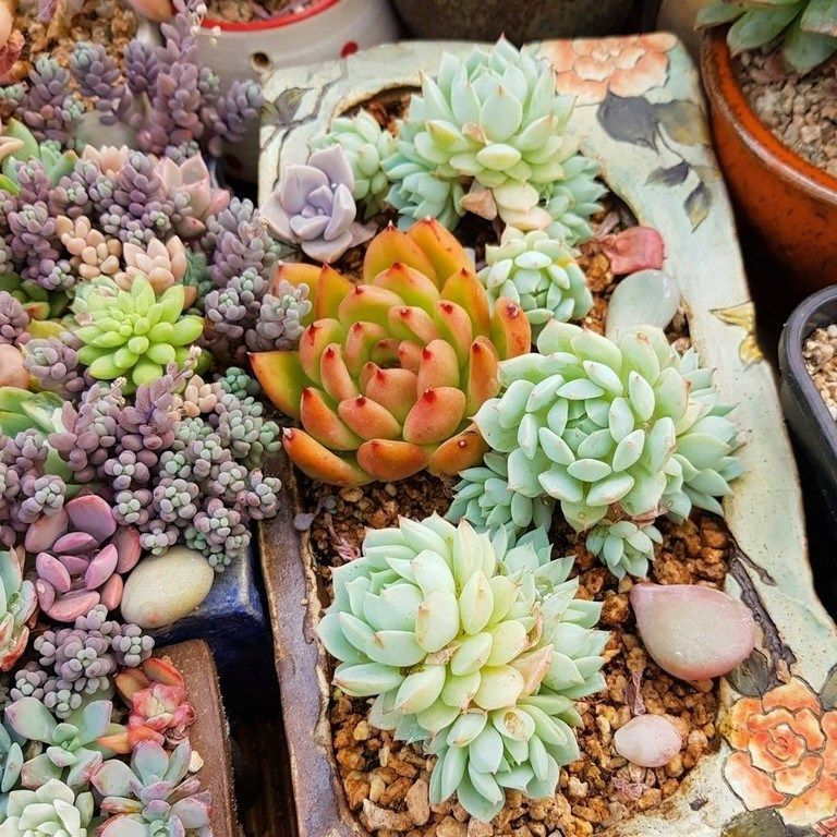 41 Lovely Indoor And Outdoor Succulent Plants Ideas Outdoor