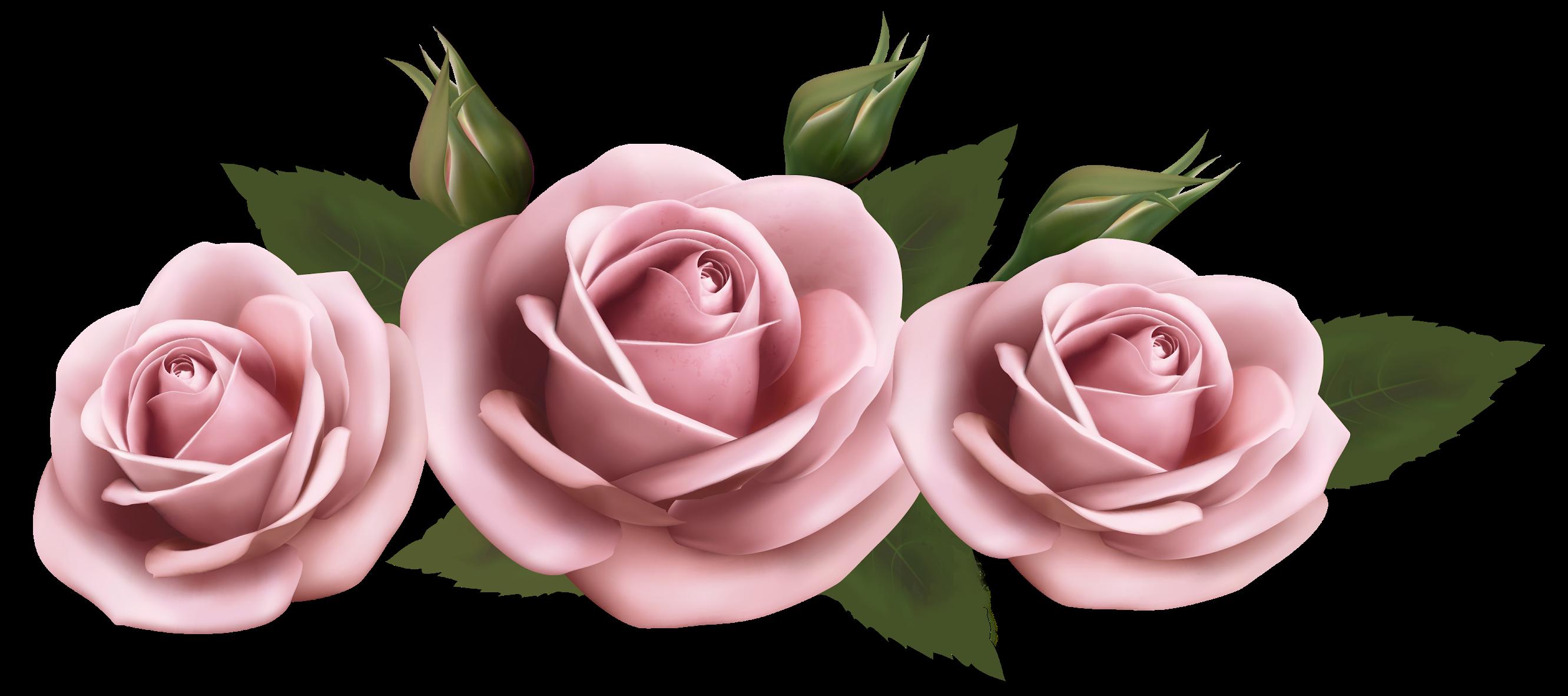 Rose Pink Clip Art Light Pink Rose Png Clipart Pink Rose Png Flower Prints Rose