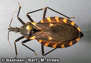Pin On Arthropod Life List