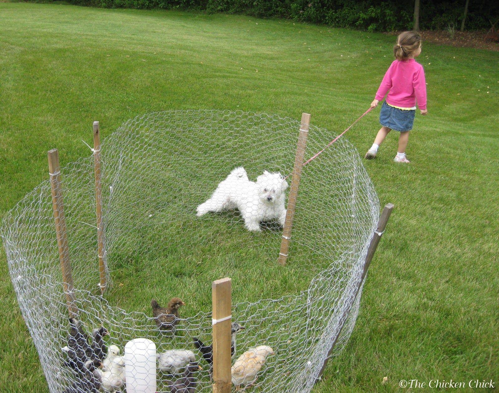 Coop Security: Hardware Cloth vs Chicken Wire   Chicken chick ...