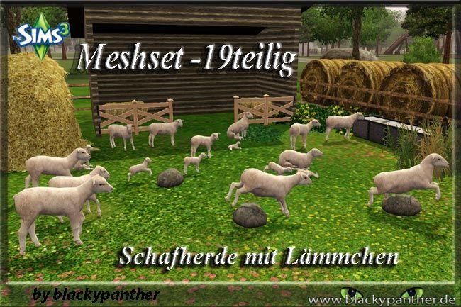 Schafe_und_Laemmer