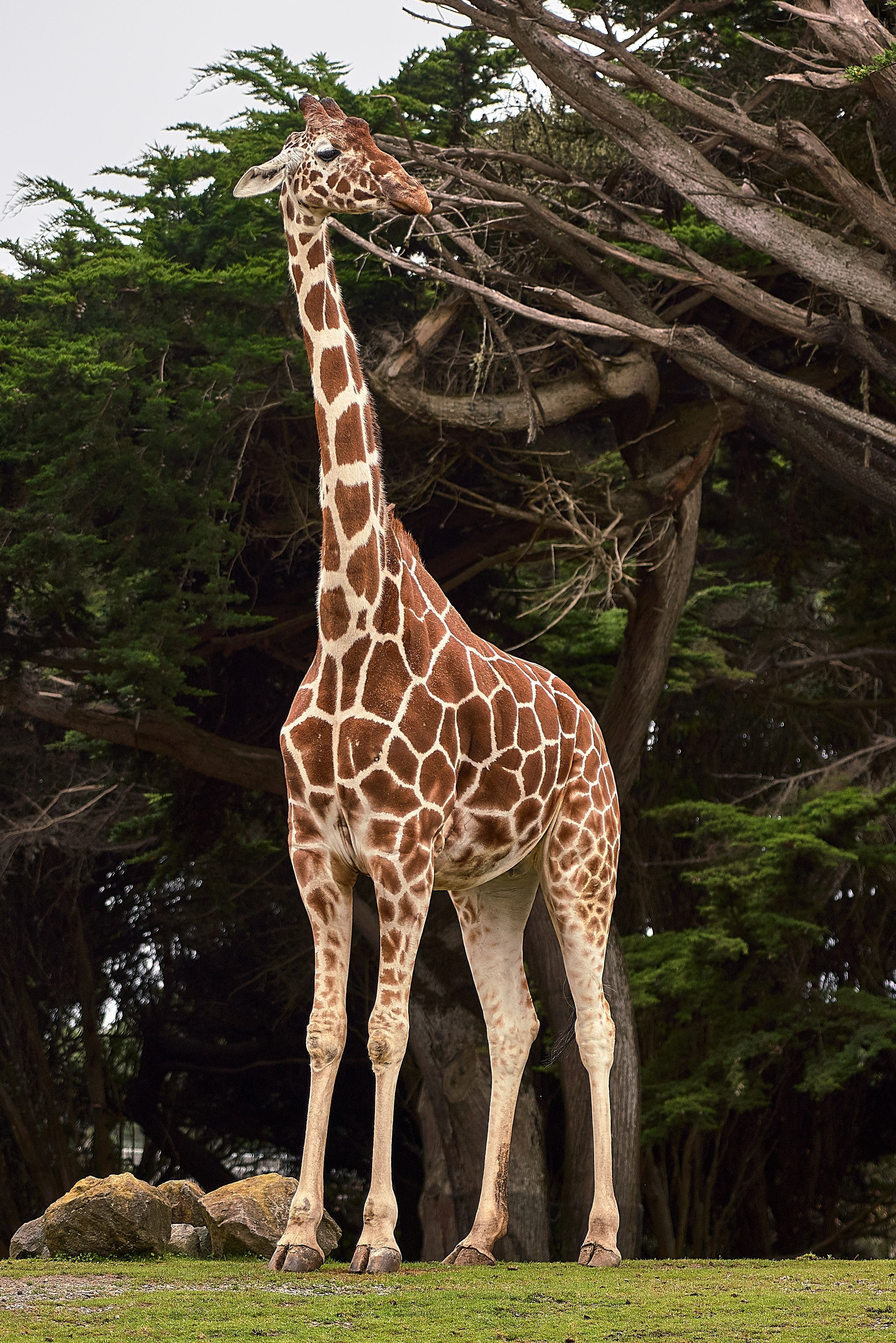 Get a Full HD image 2566x3847 by clicking on the image  Animals