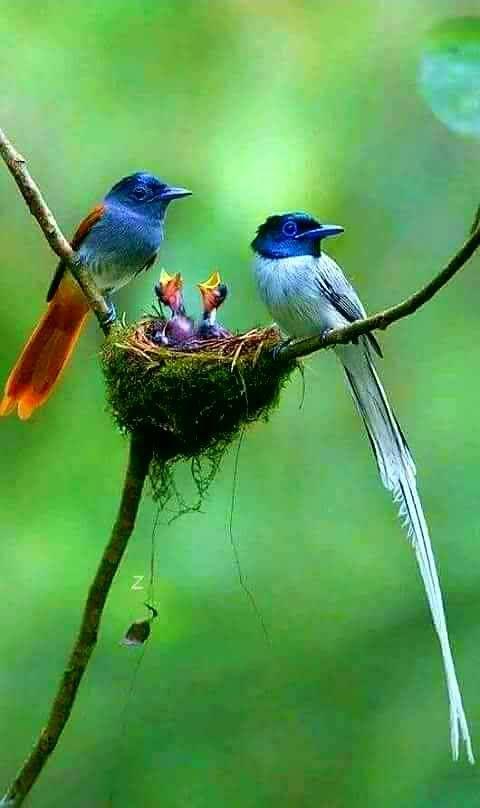 Pin By Maggy Rojas On Birds Beautiful Birds Birds Animals