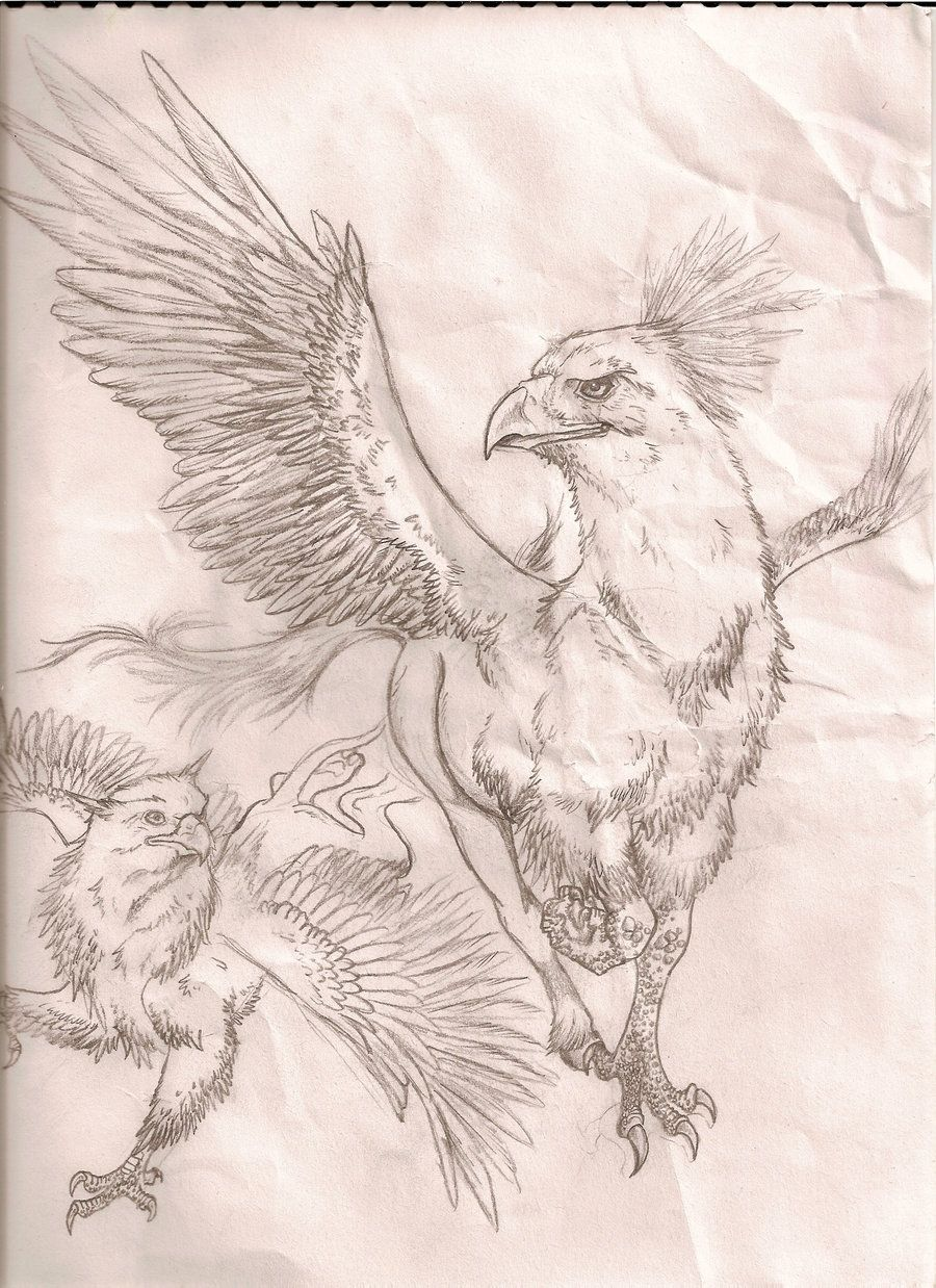 43+ Hippogriff wow information