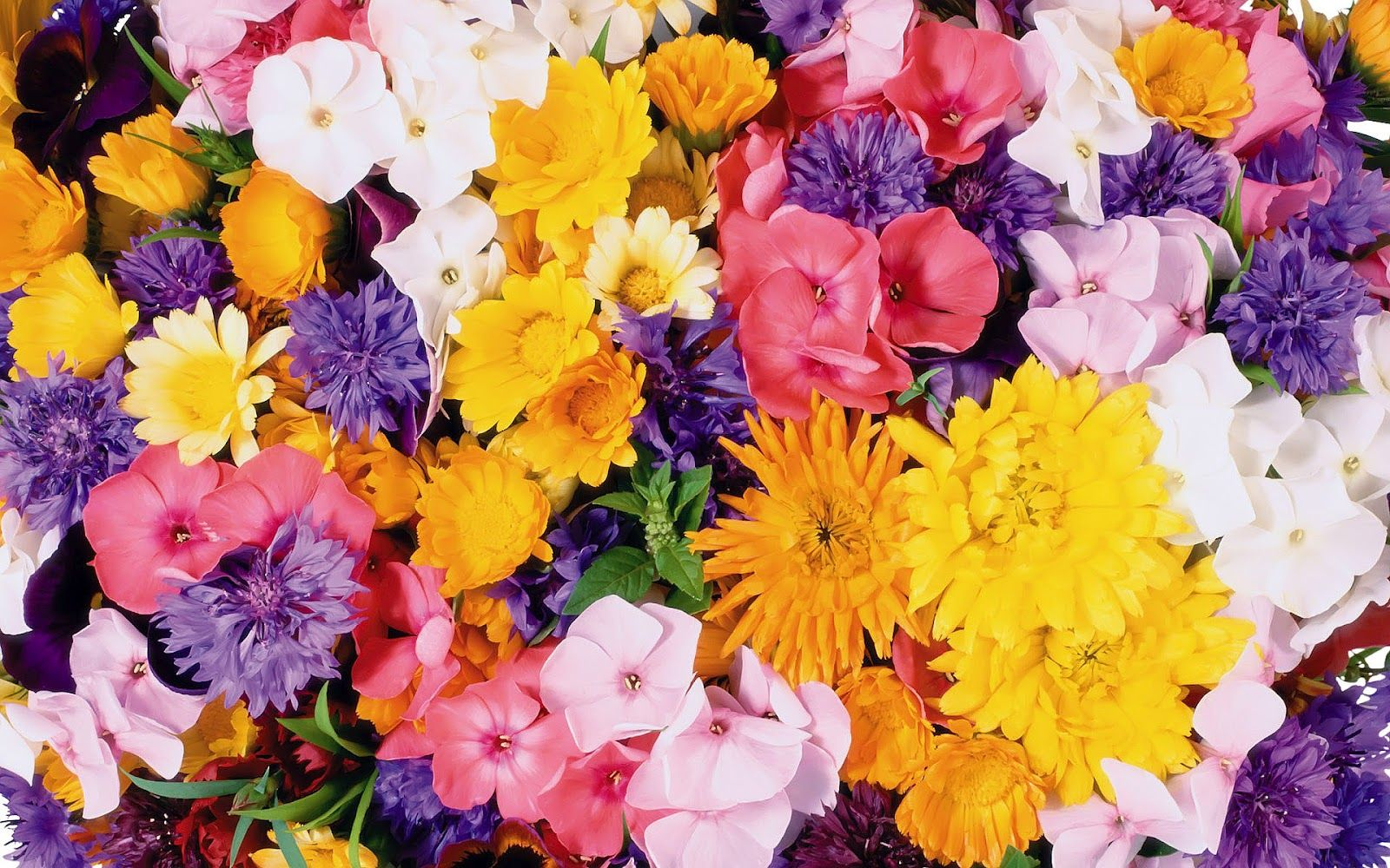 Flowers wallpapers high definition wallpapers high definition - Flower Phone Wallpapers 1600 1000 Best Flowers Wallpapers Hd 53 Wallpapers Adorable