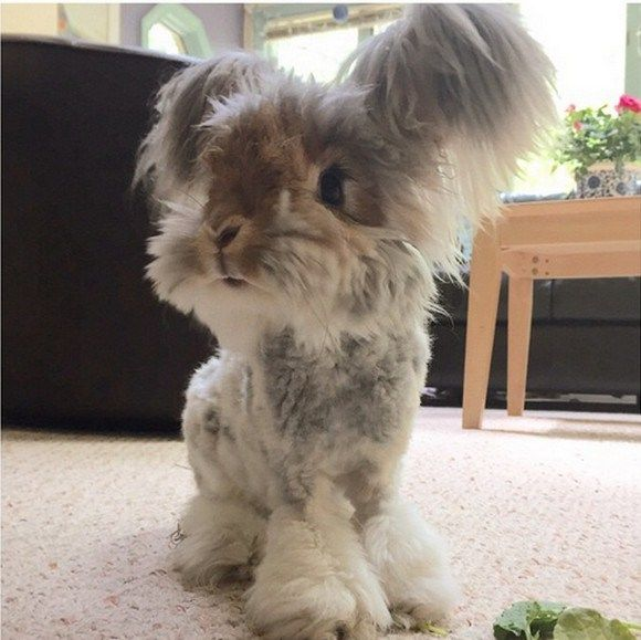 "Wally the bunny with ""angel wings"" is here to spread cuteness, joy, and lots of fluff!【Photos】"
