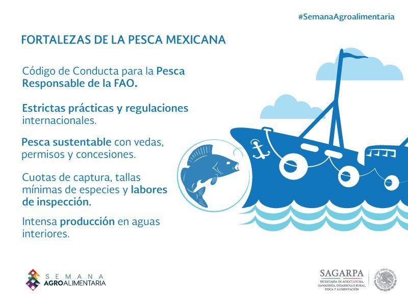 Resultado de imagen para pesca mexico infografia