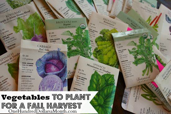 Planting a Fall Vegetable Garden - Time to Start Your Seeds - One Hundred Dollars a Month