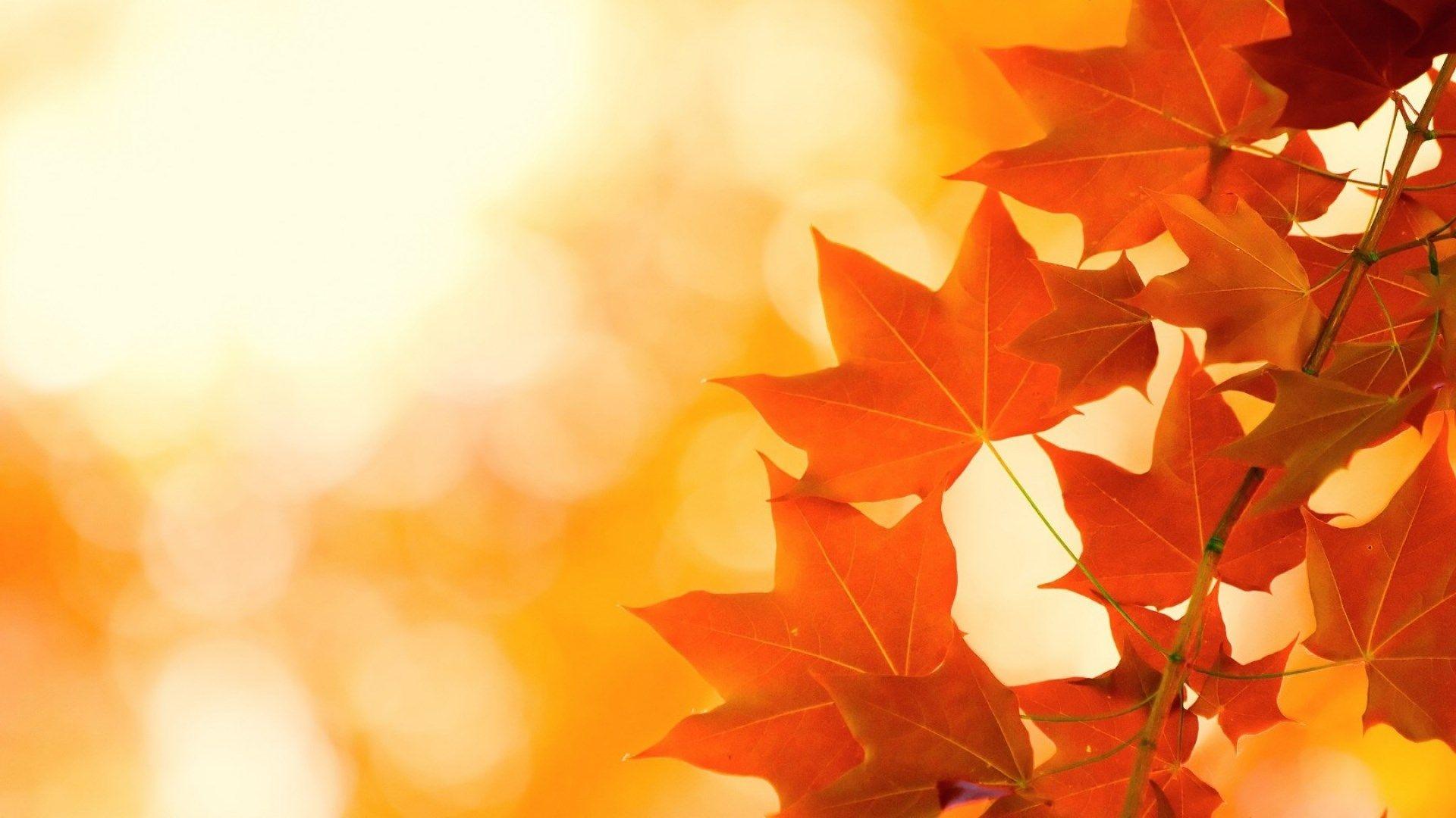 autumn free computer wallpaper