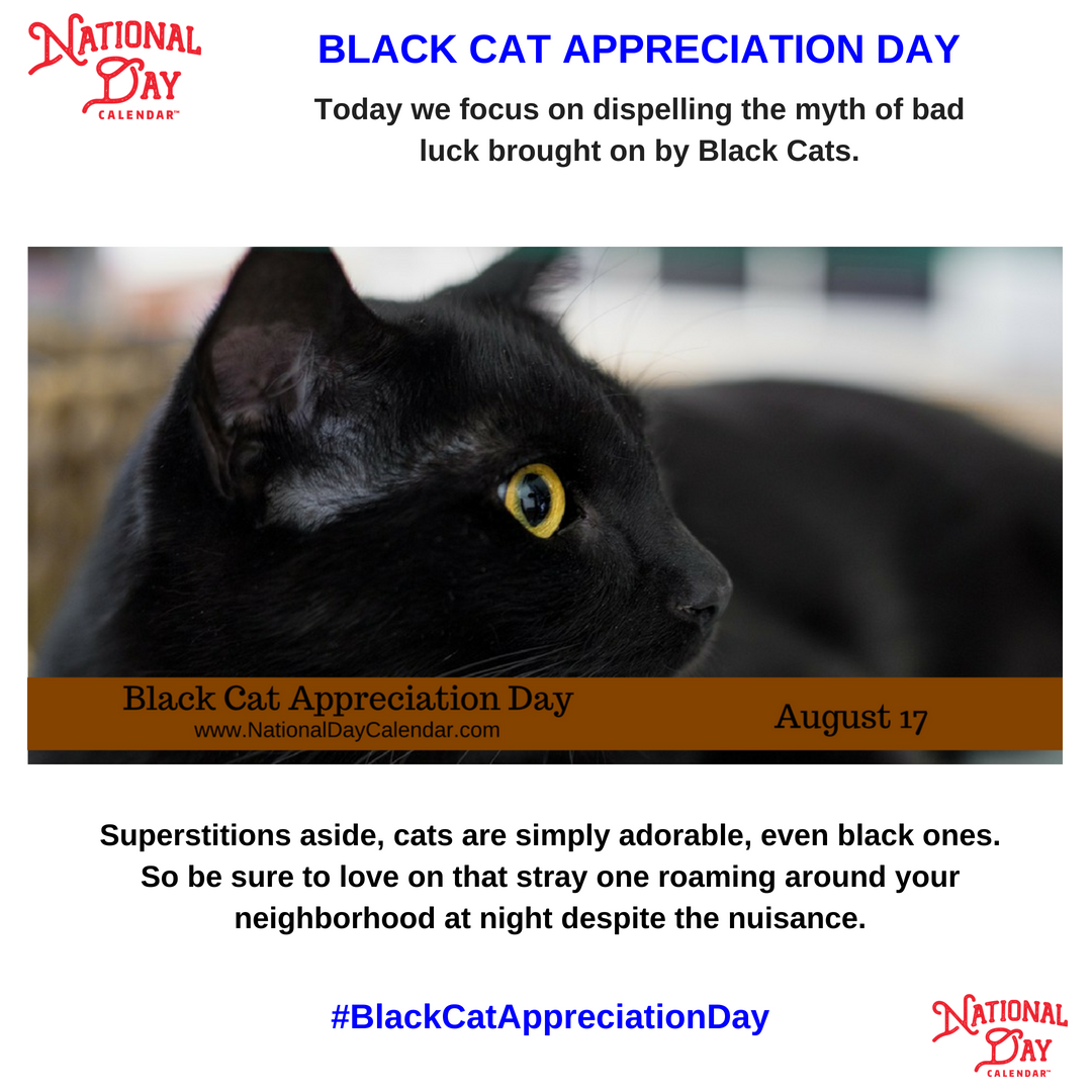 Black Cat Appreciation Day Black cat appreciation day