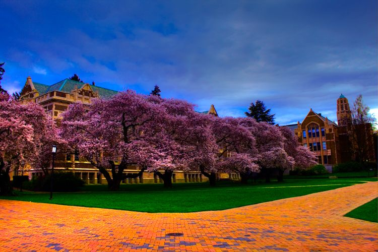 12 Places To See Cherry Blossoms In The United States In 2021 Cherry Blossom Tree Cherry Blossom Festival Cherry Blossom