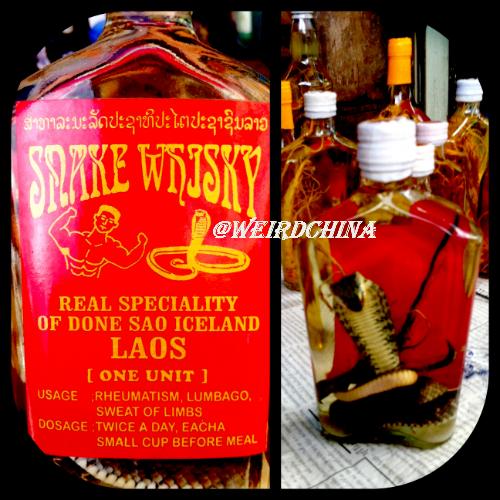 PHOTO: Bottles of Snake Wine & Whisky in Laos ~ via @RobertKongHai @weirdchina #Asia #Wine