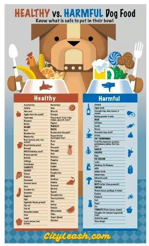 Healthy Vs Harmful Dog Food Dog Food Recipes Healthy Dogs