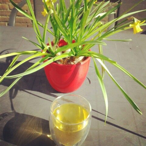 Dag272: sinaasappel jasmijn thee