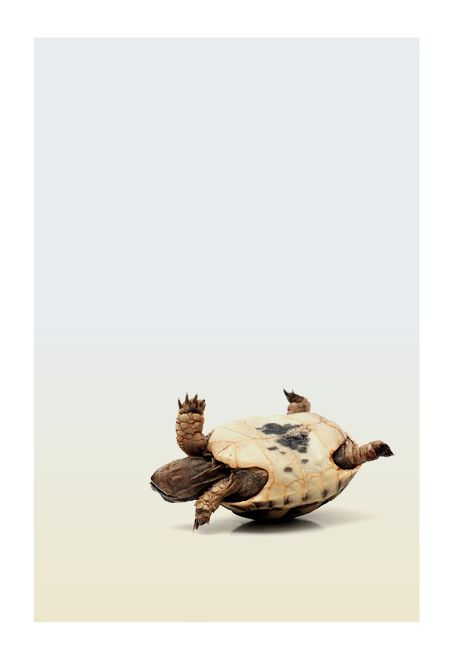 TURTLE - Tortue -Day 1014 — Ours Brim by Design Q: What if this is one long dream?