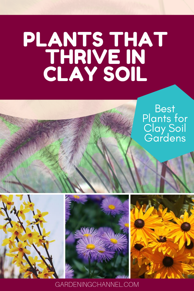 20b709b00f0143cb660b4b469afbf2f9 - How To Prepare Georgia Soil For Gardening