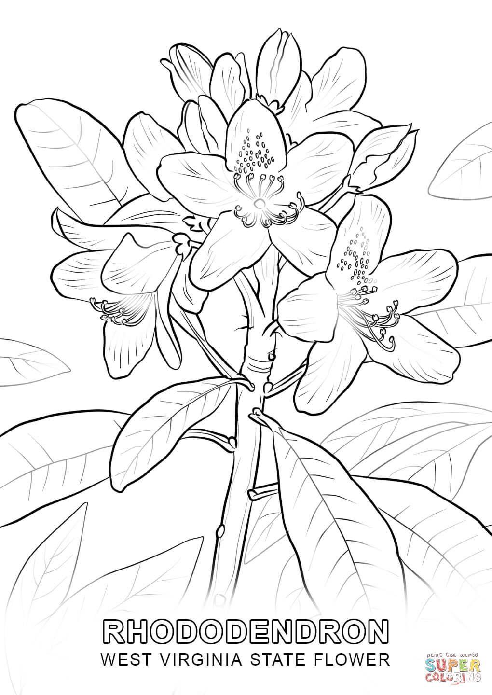 west virginia state flower coloring page jpg 1020 1440 flowers