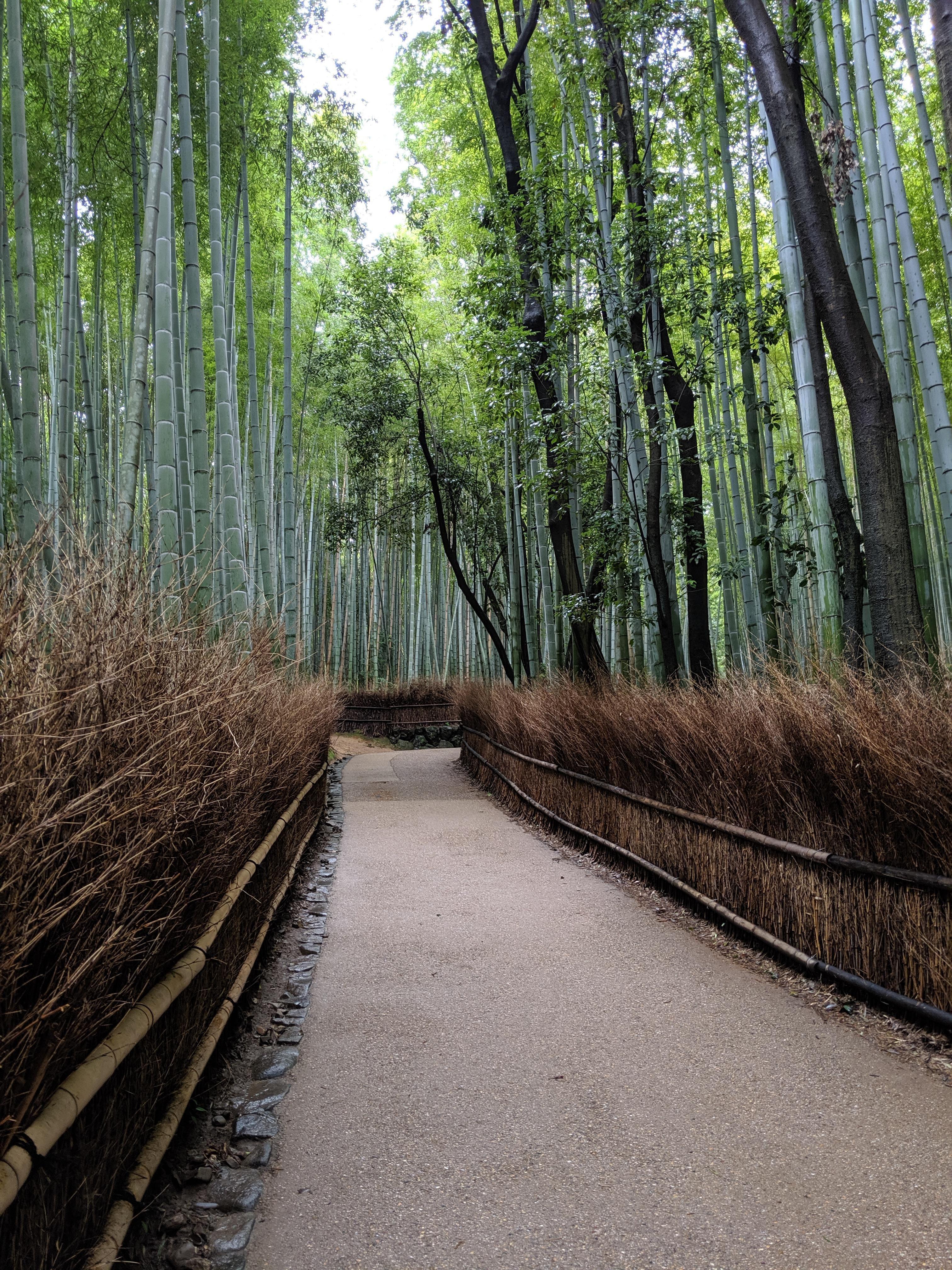 Arashiyama bamboo forest on an empty day (2019 summer)