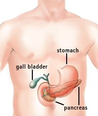 The Pancreas and Its Functions | Columbia University Department of ...