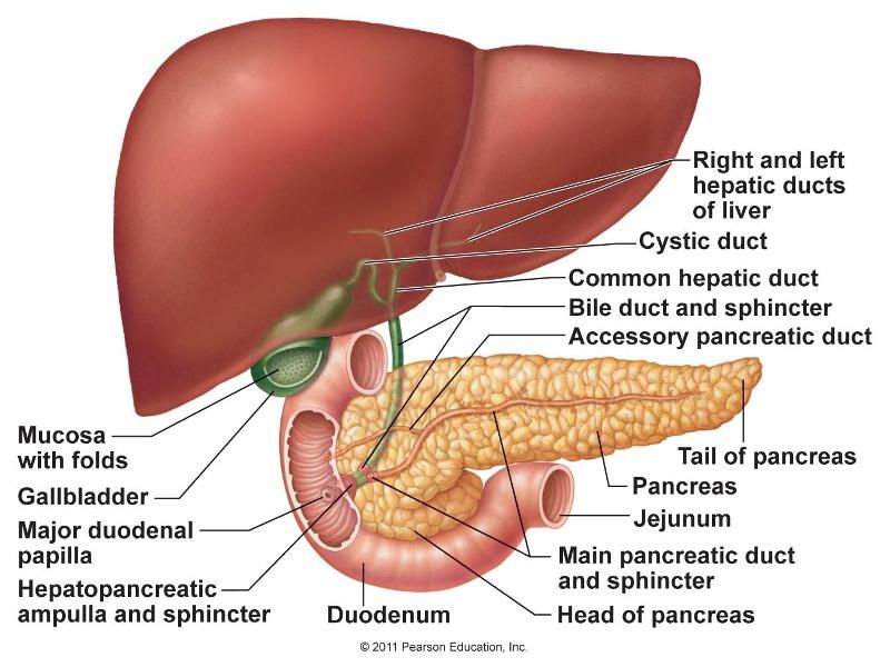 Hepatopancreatic Sphincter Diagram Illustration Of Wiring Diagram