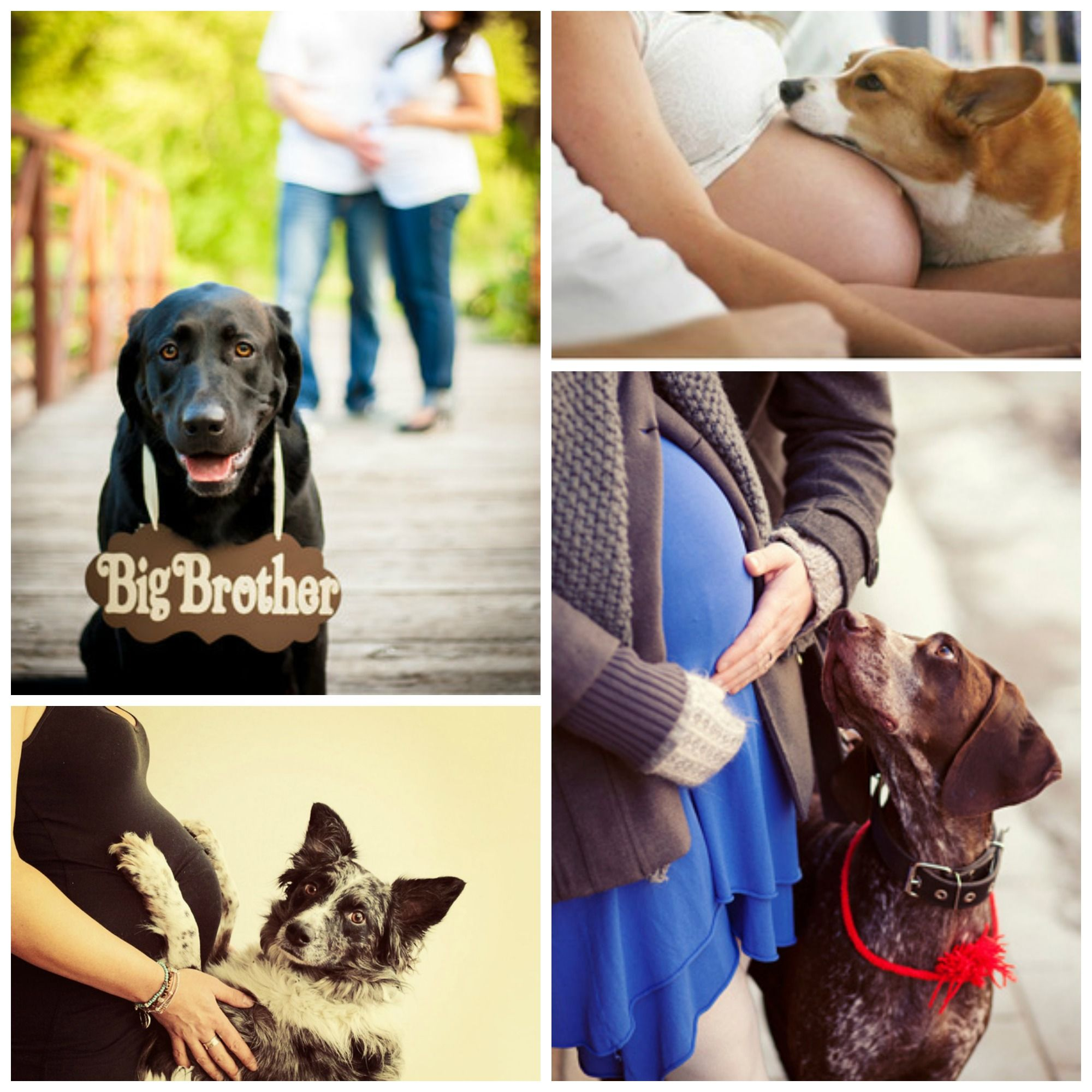 Maternity Picture Ideas With Dogs