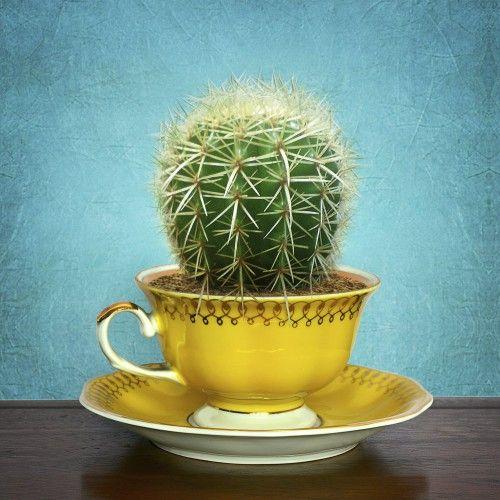 zoom tendance d co planter une plante dans une tasse un coin de verdure chez soi green. Black Bedroom Furniture Sets. Home Design Ideas