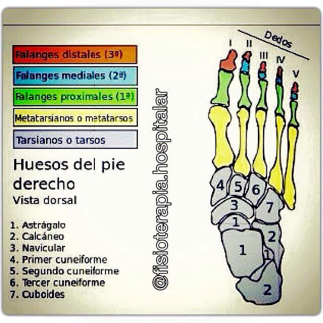 Anatomía del pie | Diseño de calzados | Pinterest | Anatomía del pie ...