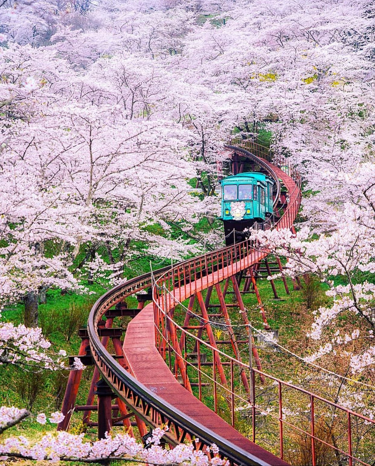 Pin By Ana Laura On Pink Cherry Blossom Japan Japan Travel Photography Japan Travel