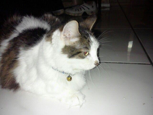 My cat precious shes so cute!!!:-)