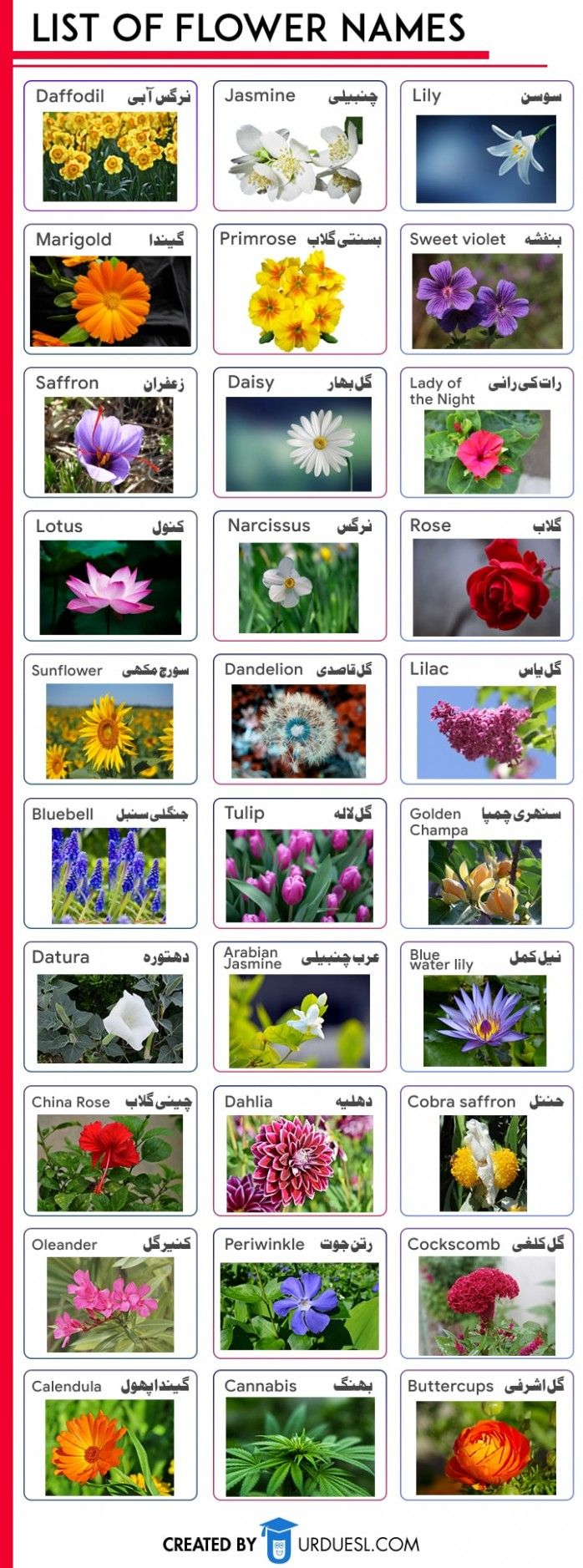 16 Common Myths About Dandelion Flower Name In Urdu In 2020 Flowers Name In English Flower Names Indian Flower Names