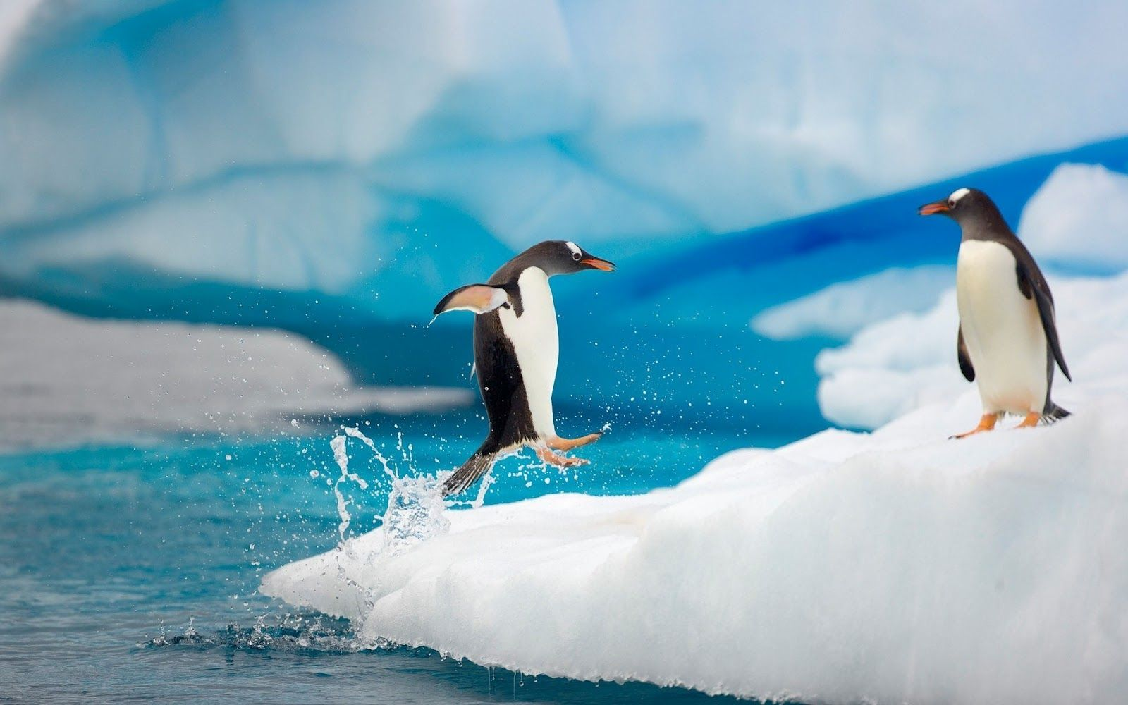 Cute penguins cute mighty pictures - Penguin Wallpaper Fantastic Penguin Images K Ultra Hd